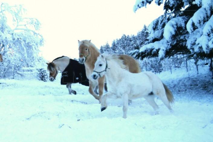 Hest i vinterleik