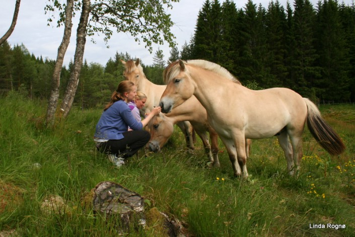 Jentene og hestane